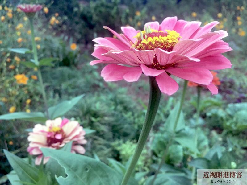 【随笔】鲜花盛开的季节,可是太热了